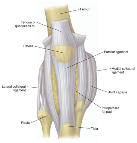 Left Knee Tendon Diagram Left Knee Bone Diagram ~ Elsavadorla